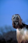 Afghan Hound Shopping cart has 3 Tabs:<br />