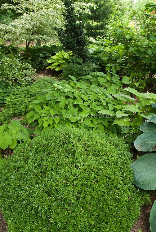 Shady Garden Perennials Hostas, Epimedium, Galium Odoratum Sweet Woodruff,  Ferns, Boxwood Buxus