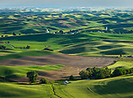 The Palouse, Whitman County, WA:Village of Steptoe and iIsolated farms amid rolling wheat fields
