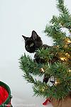 MMCR cats Christmasy photos