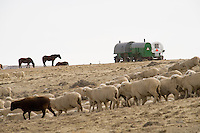 "Sheep herders' ""campitos,"" or small horse-drawn camp wagon, on Bureau of Land Management land outside Rock Springs, Wyo., Saturday, Feb. 7, 2009. Sheep herders working in southern Wyoming along the Colorado border complain of low pay, poor accomodations and lack of health care after they arrive on H2A visas to work for local ranchers. (Kevin Moloney for the New York Times)"