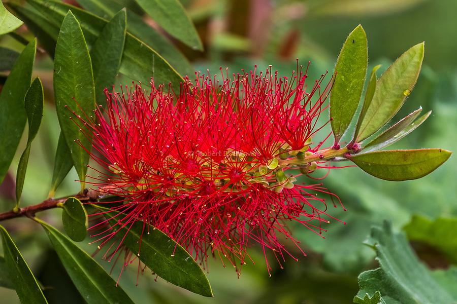 Botanical Sampler 2018