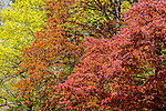 Spring colors at Mount Auburn Cemetery, Cambridge, Massachusetts, USA