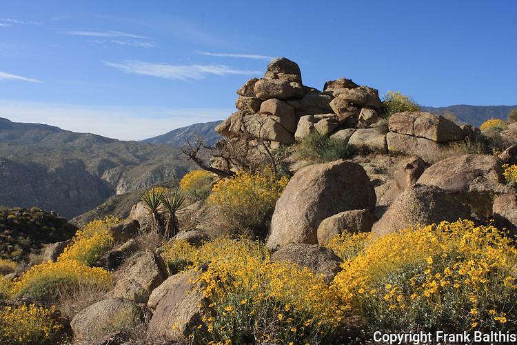 Santa Rosa Mountains with blooming bittlebush