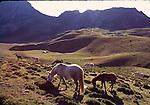 Horses in Aliva, Asturias