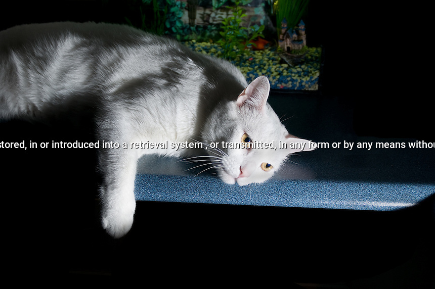 White cat laying on a counter side lit
