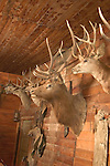 WY: Wyoming, Cody..Mounted heads at Old Trail Town..Photo #: yellow958..Photo copyright Lee Foster, 510/549-2202, lee@fostertravel.com, www.fostertravel.com..