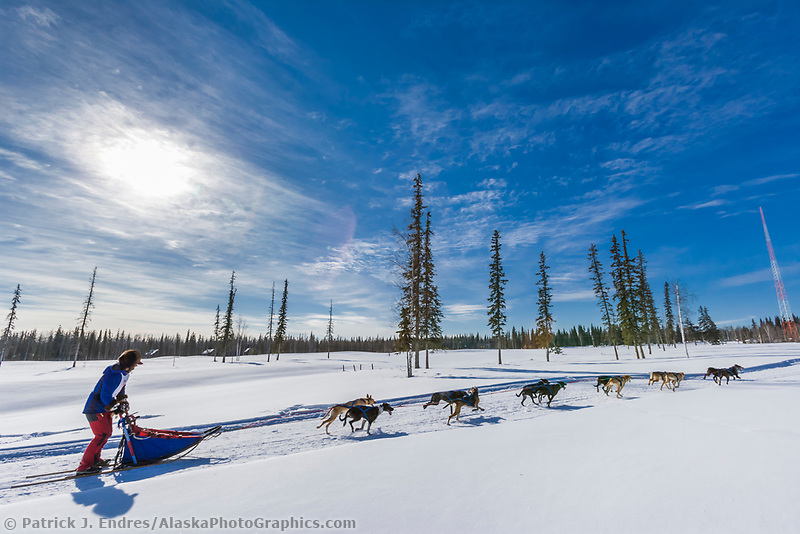 2007 Open North American Championship sled dog race (the world's premiere sled dog sprint race) is held annually in Fairbanks, Alaska.