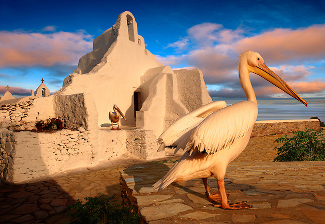 Paraportiani Greek Orthodox churches of Mykanos Chora with the Pelican town mascot Petros, Cyclades Islands, Greece