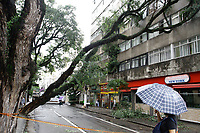 26.02.2019 - Queda de árvore na rua Veiga Filho em SP