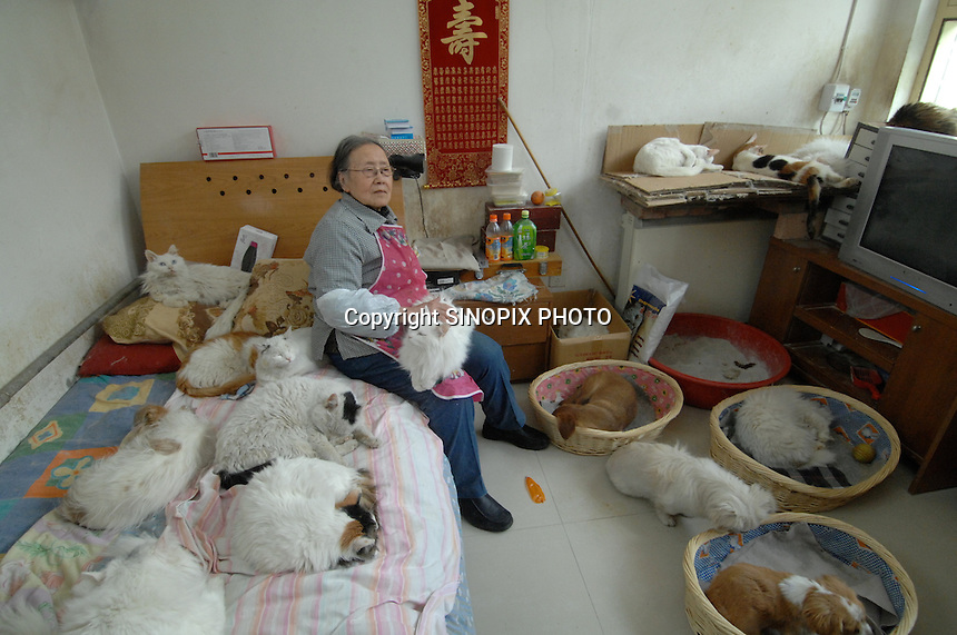 Ding Shi Rong, 80, with some of the 250 (two hundred and fifty) cats that she keeps in her walled Hutong home.  <br />