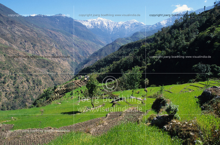 NEPAL Himalaya, Sherpa village Suri, terrace fields with wheat and snow covered mountains Gauri Shankar Range / NEPAL Himalaja, Terrassenfelder mit Weizen des Sherpa Dorf Suri in Berghaengen im Himalaya Gebirge