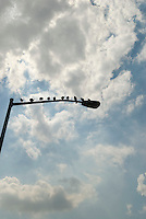 Pigeons sitting on Street Light, Manhattan, New York City, New York State, USA