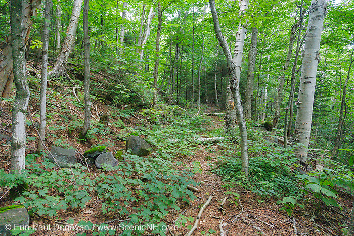 The abandoned Redrock Ravine spur line of the East Branch & Lincoln Railroad (1893-1948) in the Pemigewasset Wilderness of New Hampshire.