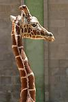Photography Animals Wildlife