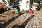 Woman drying fish on the ground Mirissa, Sri Lanka, Asia