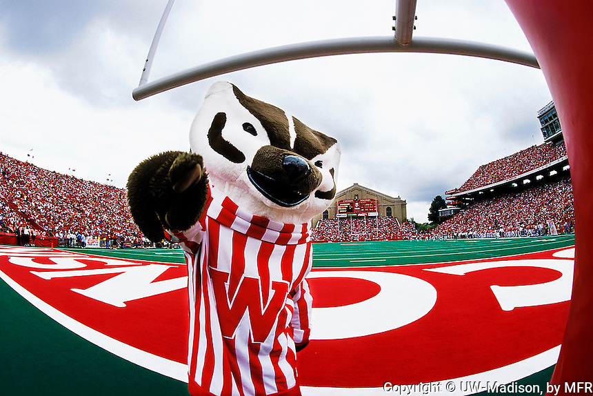 uw badgers wallpaper