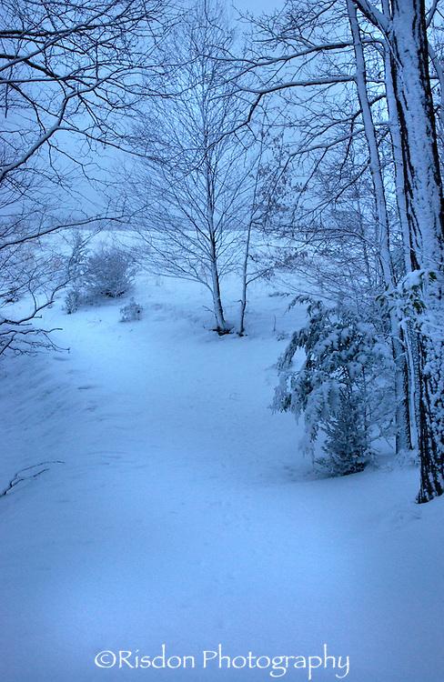 Fresh Snow at Dusk