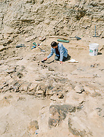Lindsay Powell, a masters student at The University of Manchester, measures the length of a dinosaur bone found at the Jurassic Mile dinosaur dig site in the Big Horn Basin in Wyoming, July 2, 2019. The bone is currently covered with plaster to prevent damage from sun and weather.<br />  <br /> Photo by Matt Nager