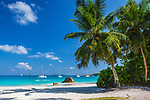 Seychelles, Palm Tree on the Beach of Anse Lazio, Island of Praslin, Seychelles