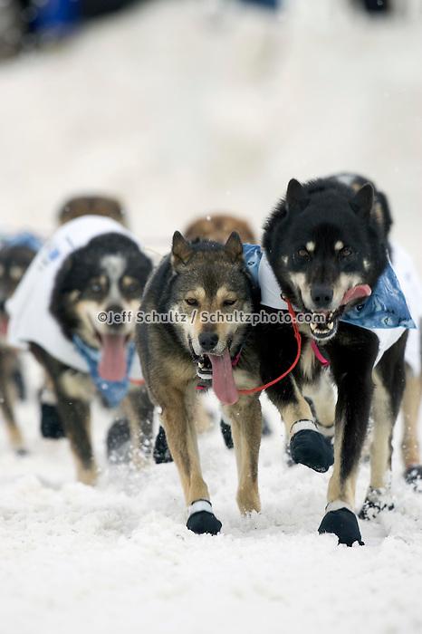 Diana Moroneys Dogs During 2005 Iditarod Ceremonial Start
