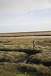 Boy walking over salt marsh, Shingle Street Orford Ness spit, Suffolk, England