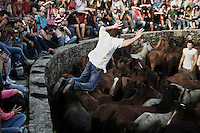 A &quot;aloitador&quot; jump horses during the Rapa das Bestas in Sabucedo (Galicia) on July 2, 2011. When summertime comes in Galicia (Northwest of Spain), the use of &ldquo;curro&rdquo; begins. A ritual which preserves the free and wild spirit of this region which has remained traditionally tied to nature.<br />