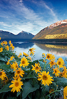 Wallow Lake and Mountains with Balsomroot. Oregon