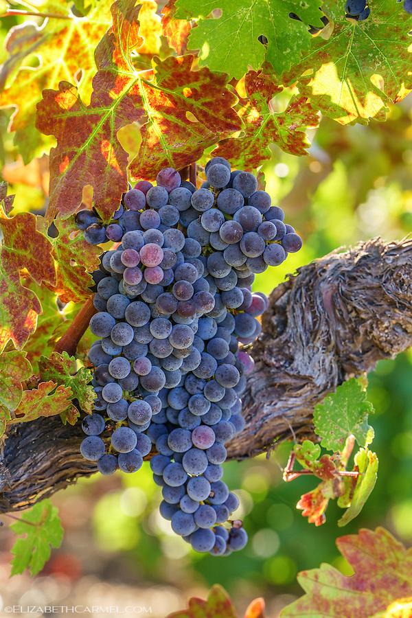 September Harvest I