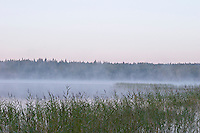 Early morning mist on the lake with reeds growing at the water's edge. Lake Flen, Smaland region. Sweden, Europe.