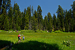 Family walking on fallen tree log whike hiking at Crescent Meadow in summer, Sequoia National Park, California
