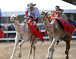 David Baxley and Crista Scronce race in the 54th International Camel Races in Virginia City, Nev., on Friday, Sept. 6, 2013.  <br /> Photo by Cathleen Allison