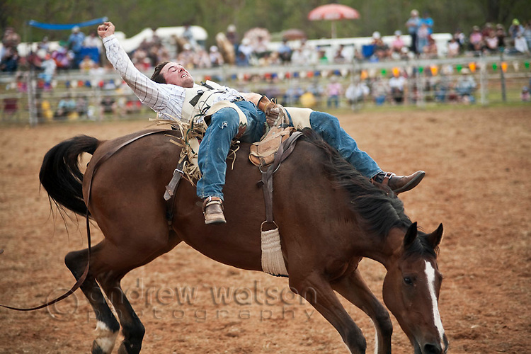 Bareback bronc rider in action at Mt Garnet Rodeo.  Mt Garnet, Queensland, Australia