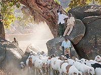 Nuba tribesmen herding their goats under the shade of rocks and a tree. Nyaro village, Kordofan region, Sudan