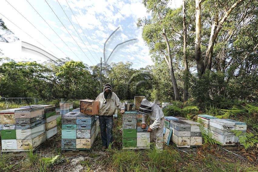 Terry Brown, 61 years old, started keeping bees at the age of sixteen as a hobby. Today, he owns more than 2,500 hives and focusses on the production of honey with nearly 200 tons produced each year.///Terry Brown, 61 ans a commencé à l'âge de seize ans l'apiculture comme un passe-temps. Il possède aujourd'hui plus de 2500 ruches et se concentre sur la production de miel avec près de 200 tonnes produites chaque année.