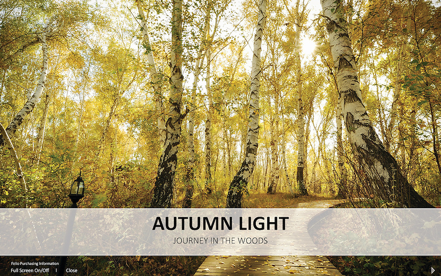 Autumn Light<br /> The Autumn Light series is an extension of the exhibition for Journey In The Woods in year 2013. This project consists of photographs that were not exhibited during the show. It is dedicated to celebrate the beauty and wonders of life through the color of autumn season.
