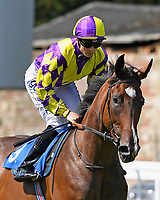 Miss Ditsy ridden by David Probert goes down to the start of The M J Church Novice Stakes during Horse Racing at Salisbury Racecourse on 15th August 2019