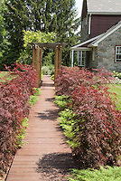 Japanese maple trees and dwarf evergreens lining pathway to front door of house, with trellis, stone home, lawn, wooden walk allee