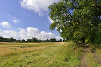 Footpath alongside arable crop field of ripening wheat, Berkshire, Uk