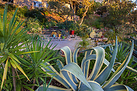 Debra Lee Baldwin backyard hillside patio garden framed by succulents, Agave americana 'Marginata' and Yucca aloifolia