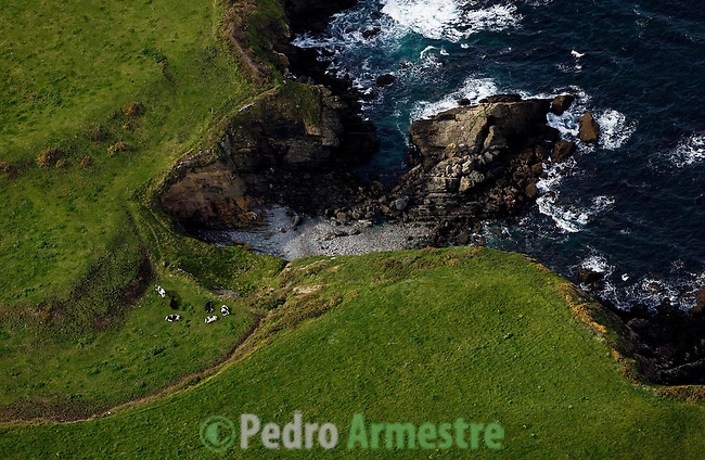 COSTA ASTURIAS. VACAS PASTANDO EN LAS PROXIMIDADES DE LA PLAYA DE CASTROPOL. 2008-04-15. (C) Pedro ARMESTRE