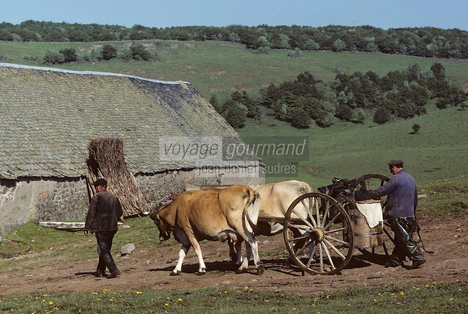 Europe/France/Auvergne/12/Aveyron: Aubrac - Transport du lait au buron de canut - Fourme de Laguiole AOC (<br /> PHOTO D'ARCHIVES // ARCHIVAL IMAGES<br /> FRANCE 1980