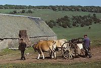 Europe/France/Auvergne/12/Aveyron : Aubrac - Transport du lait au buron de canut - Fourme de Laguiole AOC (<br /> PHOTO D'ARCHIVES // ARCHIVAL IMAGES<br /> FRANCE 1980
