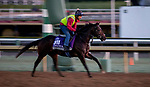 October 30, 2019: Breeders' Cup Juvenile Turf Sprint entrant Dream Shot, trained by James Tate, exercises in preparation for the Breeders' Cup World Championships at Santa Anita Park in Arcadia, California on October 30, 2019. Carolyn Simancik/Eclipse Sportswire/Breeders' Cup/CSM