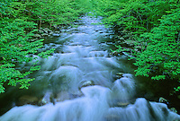 The Middle Prong of the Little River flows across riffles and through a spring forest near Tremont, in Great Smoky Mountains National Park in Tennessee