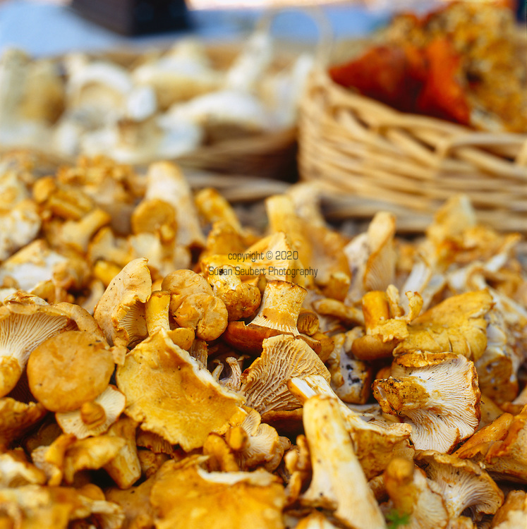 close up of wild harvested chanterelle mushrooms on display at the Portland, Oregon farmers' market