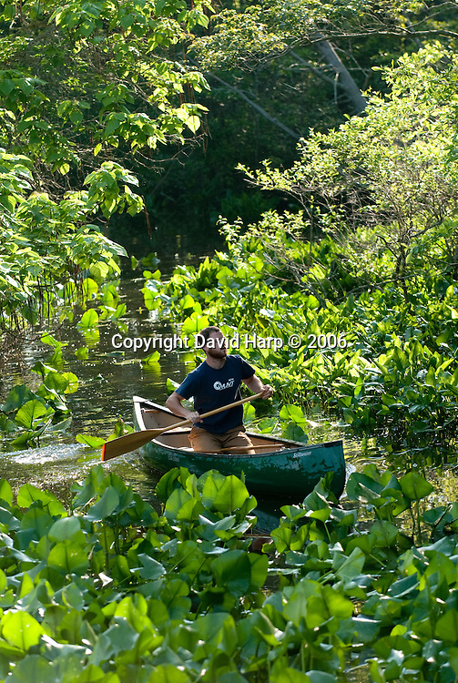 Exploring the wetland edges of Gales Creek, a tributary of the Nanticoke River, by canoe.
