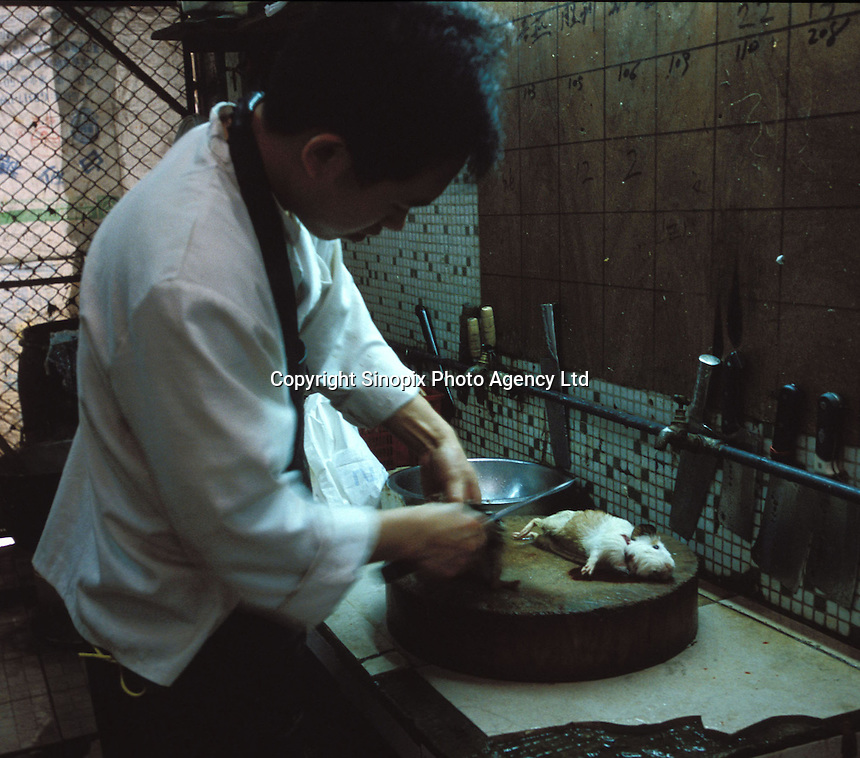 A guinea pig is killed at a restaurant specialising in exotic meats. Guinea pigs are sold as popular food in Morning Dew Meat Special Restaurant. The meat is used in hot pot and a medicinal broth that is believed to be good for health and to keep the hair from going grey...PHOTO BY SINOPIX