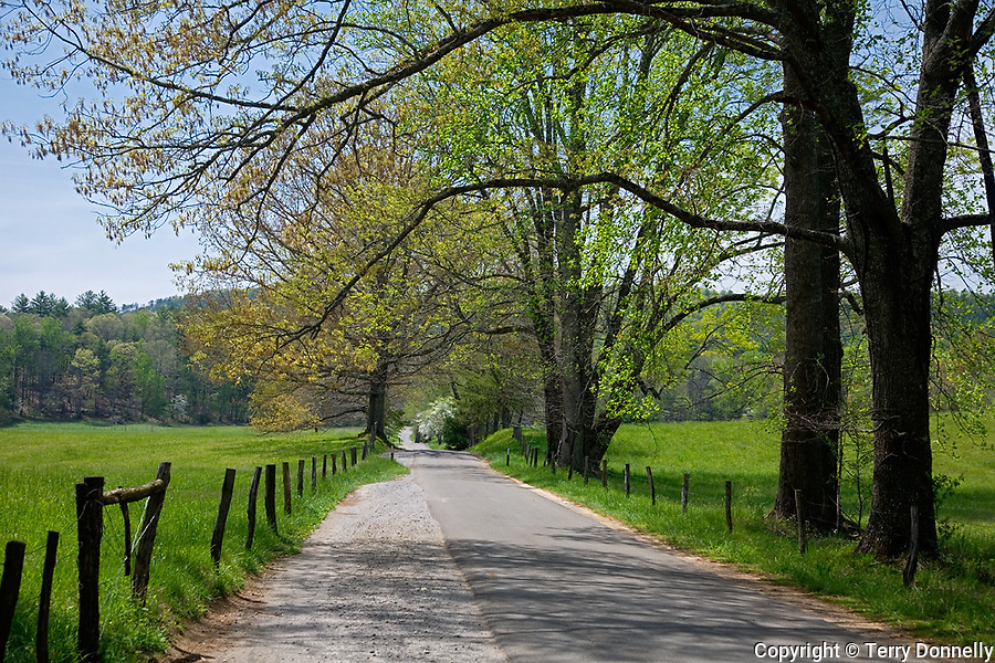Great Smoky Mts. National Park, TN/NC<br /> Spring trees and wood fence posts line the Cades Cove Loop Road in Cades Cove