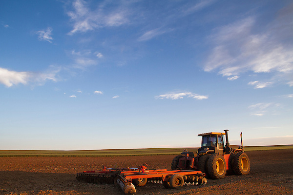 Tractor in a wheat field, Boulder, Colorado,
